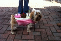 The Mt Laurel Fall Festival welcomes dog owners and their favorite pups to our broad sidewalks and dog park.