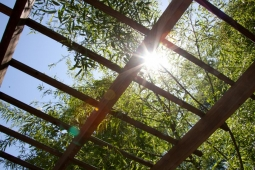 Sunlight filters through the latticework of a pergola in one resident's backyard.